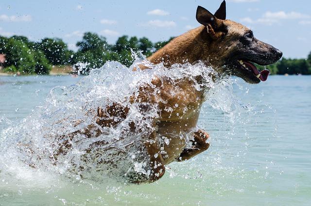 Dog enjoying the lake.